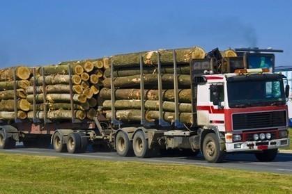 La Chine achète aussi les forêts françaises | Le chauffage au bois : du stockage du bois au poêle | Scoop.it