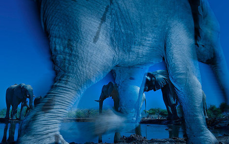 Wildlife photographer of the year 2013″ – in pictures - 7sky Magazine | Photography | Scoop.it