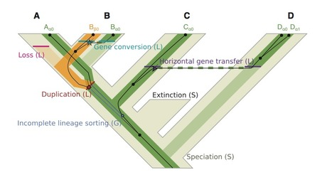 SimPhy: Phylogenomic Simulation of Gene, Locus and Species Trees   The science toolbox   Scoop.it