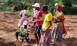 Smallholder farmers are the new global food frontier | Questions de développement ... | Scoop.it
