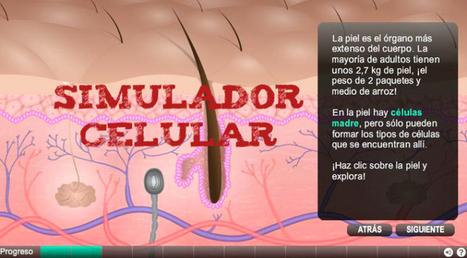Aprende a Producir Células   Simulador   apps educativas android   Scoop.it