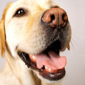 Bunny's Blog: Pet Dental Checkup Days Event Coming to PETSMART Stores | Pet News | Scoop.it