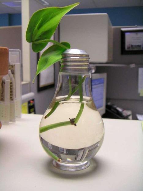Reusing Lightbulbs: as planters or mini terrariums | HTM_DIY - Artesanías | Scoop.it