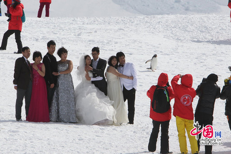 Galerie : l'#Antarctique, nouvelle destination des touristes chinois | Hurtigruten Arctique Antarctique | Scoop.it
