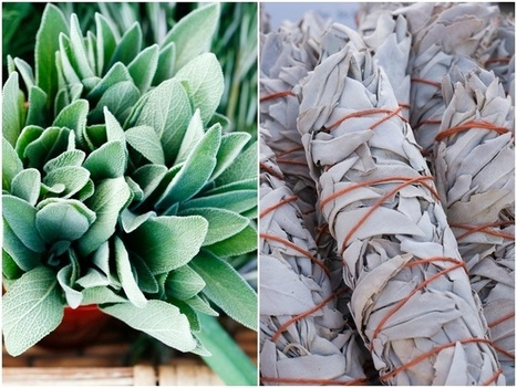 4 Reasons To Grow Sage & 20 Brilliant Ways To Use It   straw bale gardening   Scoop.it