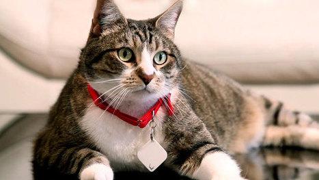 Un mouchard pour localiser ses clés, sa voiture ou son chat | CaniCatNews-actualité | Scoop.it