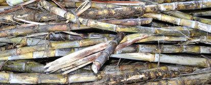 A la Réunion, les déchets de canne à sucre deviennent électricité | Cleantech Republic | Les initiatives du changement | Scoop.it