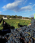 SITE OFFICIEL DE LA VILLE DE CHINON | AOC Chinon et Vins de loire | Scoop.it