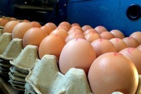 Woolworths removes caged eggs from ACT stores | Food Ethics | Scoop.it