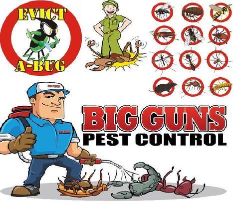 Get Professional Pest Control Services at 1800getatradie.com.au | Get A Tradie | Scoop.it