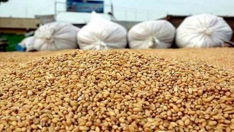 La production algérienne de céréales en forte baisse à cause d'une sécheresse inédite depuis 50 ans - TSA   Agriculture et Alimentation méditerranéenne durable   Scoop.it