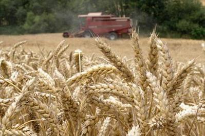 Cereales, canal agricultura - todas las noticias, legislación, e información en general de agricultura especializada en cereales. | iRiego | Scoop.it