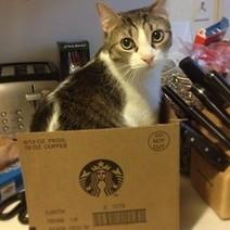 7 out of 10 Cats Choose Starbucks<br/> A new study has... | Les chats c'est pas que des connards | Scoop.it