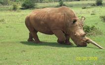 Rhino Summit in Nairobi develops action plan - eTurboNews.com   What's Happening to Africa's Rhino?   Scoop.it
