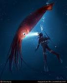 Sólo existe una especie de calamar gigante en el mundo | Population genetics | Scoop.it