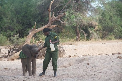 Samburu Community to Open Elephant Sanctuary | Pachyderm Magazine | Scoop.it