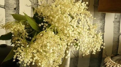 Recette printemps - Fleur Sureau Limonade Cocktail | Horsdoeuvre.fr | Cette nature qui nous soigne | Scoop.it