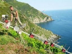 Vignobles de fortes pentes : demande de subventions pour la viticulture héroïque | Le vin quotidien | Scoop.it