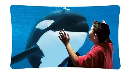 #SeaWorld Parks & Entertainment or SeaWorld Prisons & #Embarrassment. | #Orca #Avenger @VidarOceans | Scoop.it
