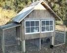 Small Chicken Coop Designs & Pictures of Chicken Coops - BackYard Chickens Community | stop snoring | Scoop.it