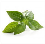 Methyl Chavicol | Essential Oils, Mint Products, Menthol Crystals | Scoop.it