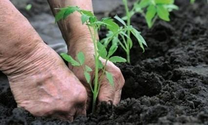 En février, dans mon jardin potager, il y a… | Notre planète pour tous | Scoop.it