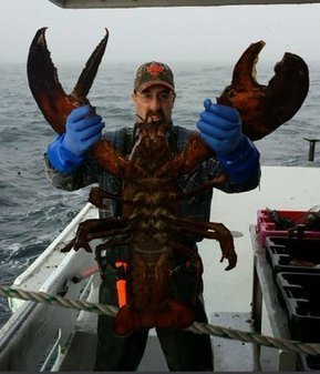 Tweet from @SteveM2020 | Nova Scotia Fishing | Scoop.it