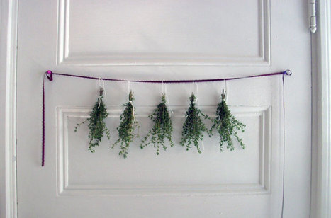 Freezing, Drying, and Storing Herbs 101 - HOMEGROWN | Alysha Mae | Scoop.it