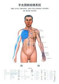 #Acupuncture, faisons le point sur Lie Que 7 P   Huiles essentielles bio, huiles de massage   Scoop.it