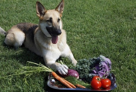 Farm To Fido: Dog Food Goes Local : NPR | Food for Pets | Scoop.it