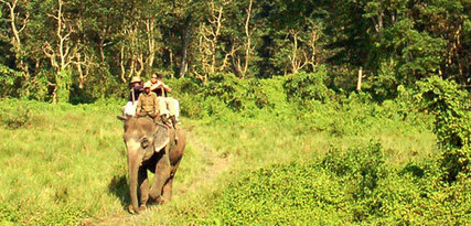 Jungle safari Nepal | Nepal Travel info | Scoop.it