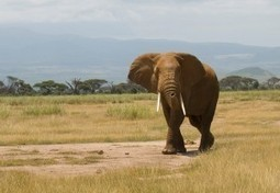 Support the Use of Anti-Poaching Device | GarryRogers Biosphere News | Scoop.it