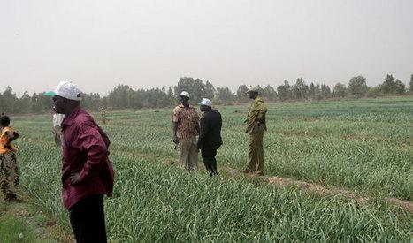 Le Niger vise l'autosuffisance alimentaire | Questions de développement ... | Scoop.it