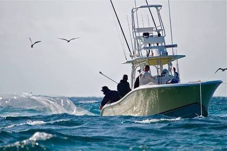 Bass2Billfish - Timeline Photos | Facebook | From South Beach to Key West | Scoop.it