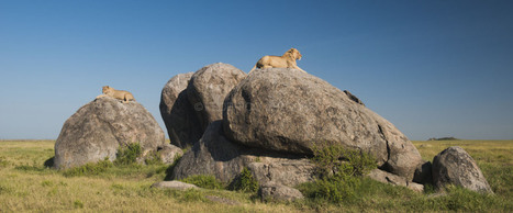Day #8 Southern Serengeti, Tanzania | African Wildlife Photography ... | Serengeti Safari | Scoop.it