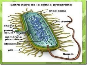 Que Son Las Celulas Procariotas - TuSaludesvida | TU SALUD ES VIDA | Scoop.it