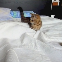 Le chaton et le terrifiant fantôme (Vidéo du jour) | CaniCatNews-actualité | Scoop.it