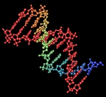Multiplex Genome Engineering Using CRISPR/Cas Systems   SynBioFromLeukipposInstitute   Scoop.it