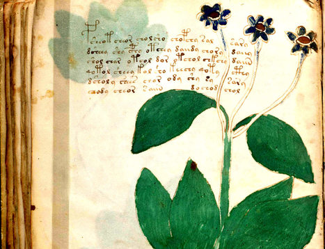 New signs of language surface in mystery Voynich text | Merveilles - Marvels | Scoop.it