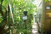 UN JARDIN-JUNGLE EN PERMACULTURE BIO | S.P.I.R.A.L.E. Alternatives | Économie circulaire locale et résiliente pour nourrir la ville | Scoop.it