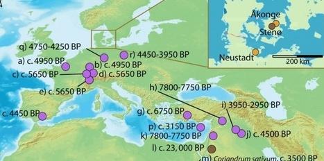 EUROPE : Les épices utilisées depuis 7000 ans   World Neolithic   Scoop.it