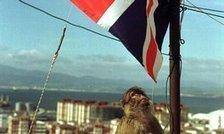 John le Carré's very British features | TLS | Littérature des îles Britanniques | Scoop.it