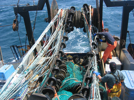 HUNTING & POACHING: New fishing nets reduce bycatch, sparing sea life | > Animal Welfare | Scoop.it