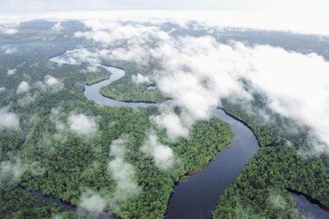 El Amazonas reduce a la mitad su capacidad para absorber dióxido de carbono | MOVUS | Scoop.it