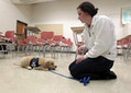 Students make University of Kentucky a laboratory for training service dogs   Education   Kentucky.com   EDP 203   Scoop.it