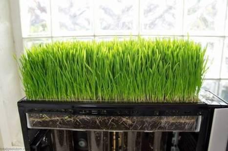 Bio Computer: il PC dove cresce l'erba mentre lavora con linux | Tecnologia Verde | Scoop.it