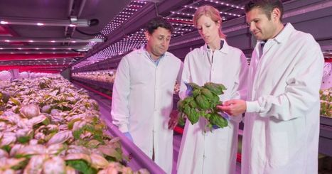 West Louisville to get $23M, 40-job indoor farm | Vertical Farm - Food Factory | Scoop.it