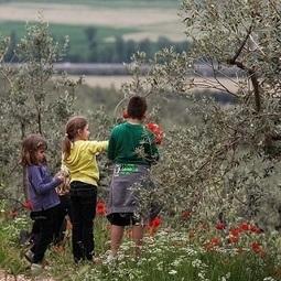 Pic & Nic a Trevi: musica, merende  e passeggiate tra gli olivi | Umbria & Italy | Scoop.it