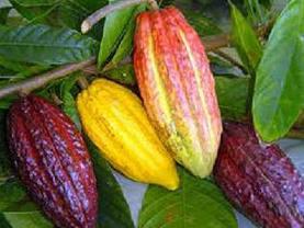 Exportação de cacau proporciona receita de 5,5 M US$   Cacau   Scoop.it