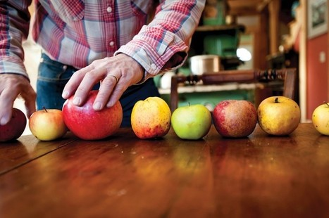 Why Your Supermarket Sells Only 5 Kinds of Apples | Farming, Forests, Water, Fishing and Environment | Scoop.it